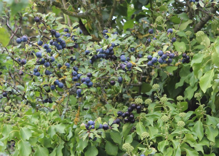 how to drink homemade sloe gin
