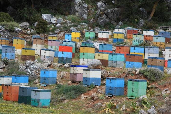 Crete bees
