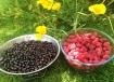 blackcurrants loganberries