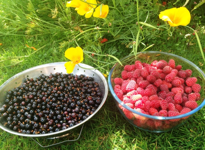 blackcurrants loganberries